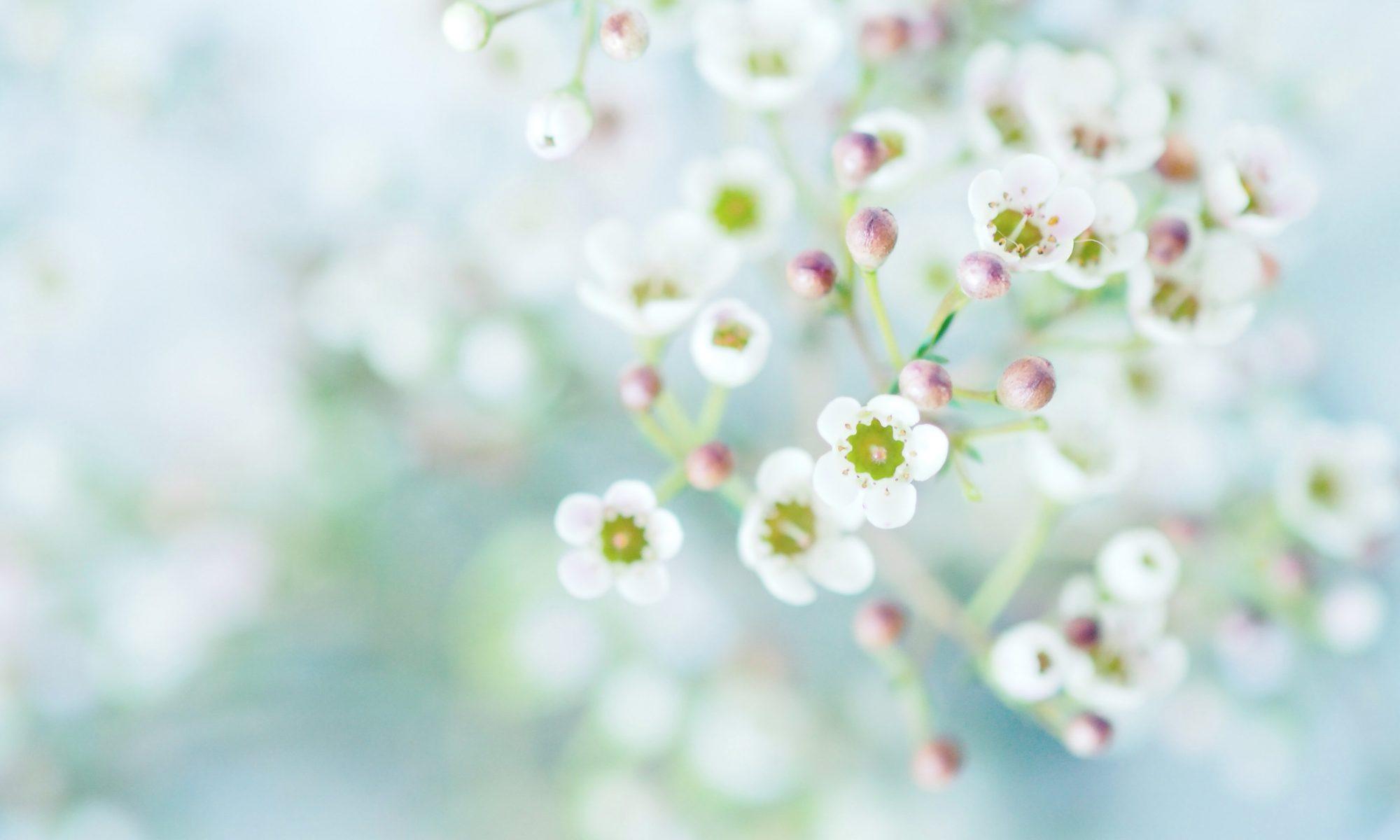 fairy's® Aromatherapy & Spiritual Shop
